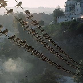 """""""Golondrinas en Setenil"""", premio de fotografía de MedioAmbiente"""