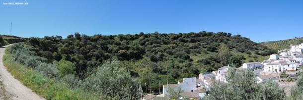 Panorámica de La Umbría. En esta imagen podéis ver de cerca la gama casi exclusiva de verdes de este misterioso bosque Foto: ÁNGEL MEDINA LAÍN