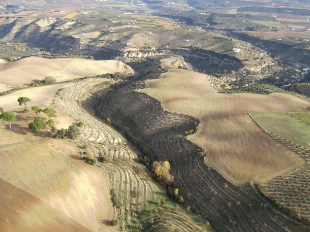 Impresionante imagen de los bancales del Tejarejo, en la que se divisan los pinares del Tejarejo y algunos ramos del recorrido. Foto: JOSÉ DURÁN.