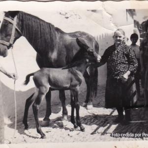 BURROS Y CABALLOS EN LA CALLE. Pedro Moreno y María Camacho en la calle Alta, celebrando la llegada de un potrillo. Los caballos, mulos y burros formaban del paisaje del pueblo.