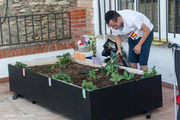 Juan Ramón, que no soportaba ensuciarse las manos, ya maneja perfectamente la siembra: mueve la tierra, pone la semilla, la entierra despacito y aprieta con las manos. Foto: ÁNGEL MEDINA LINARES