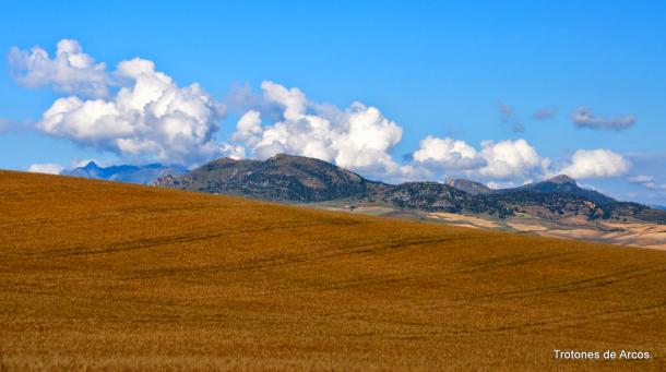 Campo de cereales con la sierra del Pinar a la izquierda y El Gastor a la derecha, en el camino de Setenil a Alcalá del Valle. Foto: TROTONES DE ARCOS. Más imágenes en este reportaje http://goo.gl/KVU57D