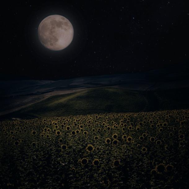 Luna llena sobre un campo de girasoles en Los Villalones. Foto: JORGE LIZANA. Más imágenes suyas en este enlace http://goo.gl/pIMUIG