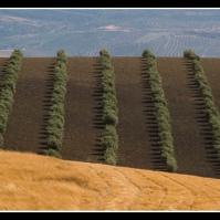 Camino de Los Villalones a Setenil. Foto: PACA ATIENZA.