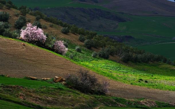 Esta imagen de Los Villalones es una auténtica paleta de colores. Foto: PEACE ON EARTH
