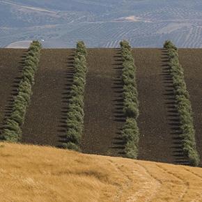 Paisajes y caminos de Setenil vistos por susviajeros