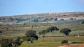 Los pinos del Tejarejo, en una magnífica fotografía con Acinipo al fondo. Foto. TROTONES DE ARCOS. Más imformación aquí http://goo.gl/NsRQMF