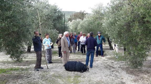 Visita de turistas a un olivar en La Loma de Jaén. Foto: IDEAL