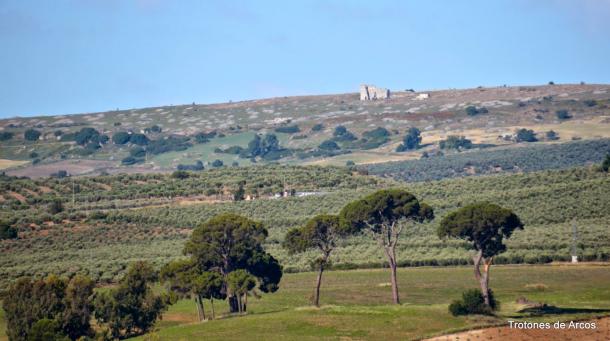 Los pinares del centenario cortijo El Tejarejo, con la ciudad romana de Acinipo a tiro de piedra. Foto. TROTONES DE ARCOS. Más información en este enlace http://goo.gl/M2GLlU