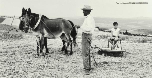 Trillando una palva de trigo. Verano de 1964. Montado en el trillo José Luís Benítez Marín, hermano de Manuel Benítez Marín, que ha cedido la foto.