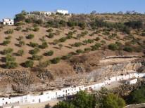 Las Cabrerizas, la impresionante calle cueva de Setenil que sostiene un olivar. Foto. PAOLO LUSUARDI.