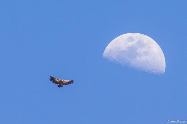 La Luna y la naturaleza, unidos en esta excepcional foto.