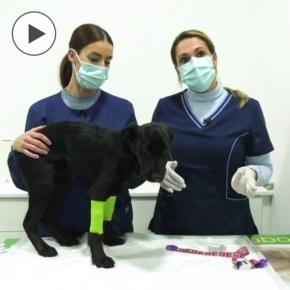 La clínica veterinaria de Esther Rivera enSetenil
