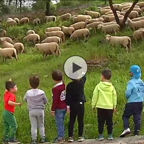 """Las ovejas jardineras de Setenil en """"Espacio Protegido"""""""