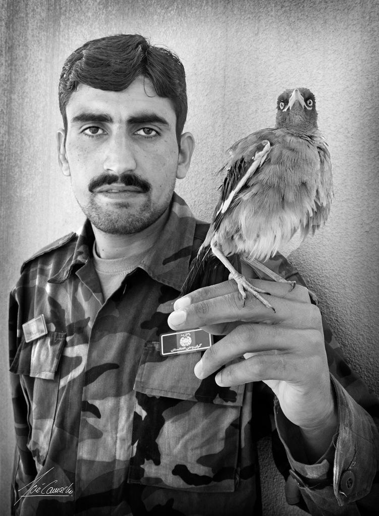 """""""Soldado con pájaro. En algunos ejércitos los soldados suelen tener algún animal que a la larga acaba siendo la mascota de la Unidad. El soldado afgano exhibe orgulloso el pájaro que ha domesticado. No supimos a ciencia cierta qué clase de ave era""""."""
